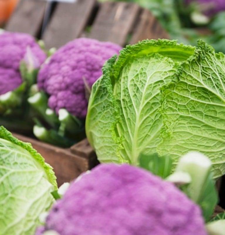 Green cabbage and purple cauliflower heads