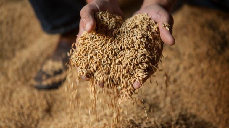 Fermier avec des graines de riz entre les mains