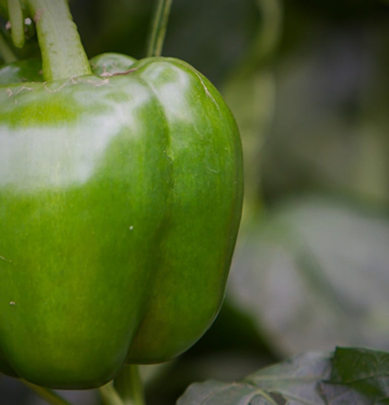PEPPERS - THE GREEN TEST