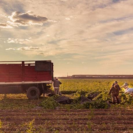 Sustentabilidad Knorr, Plantación