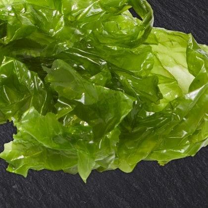 Knorr Seaweed Profile
