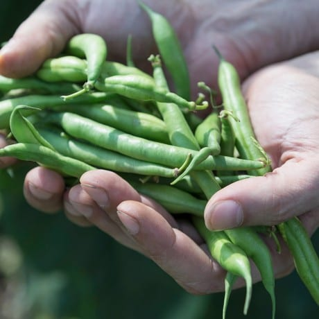 Sustainability: Green beans