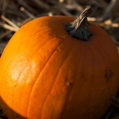 Sustainability: Pumpkins